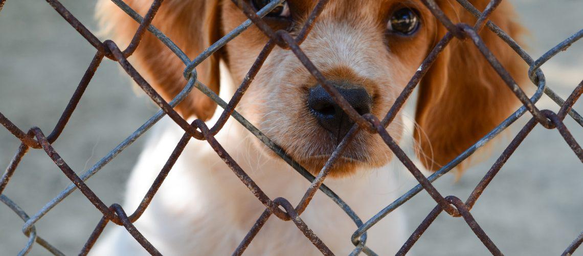 dreamstime_m_57710472-puppy-cage